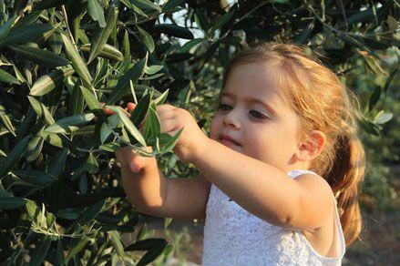 Acquisto olio extravergine di oliva italiano