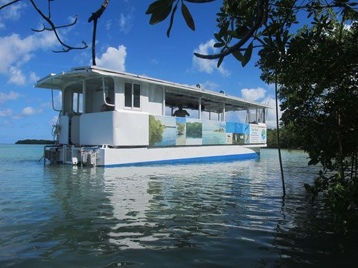 ecotour mangrove excursion