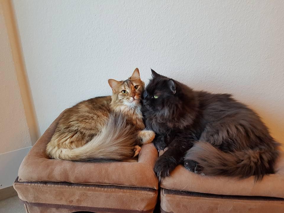 Roxana und Hayo Kastraten die sich lieben