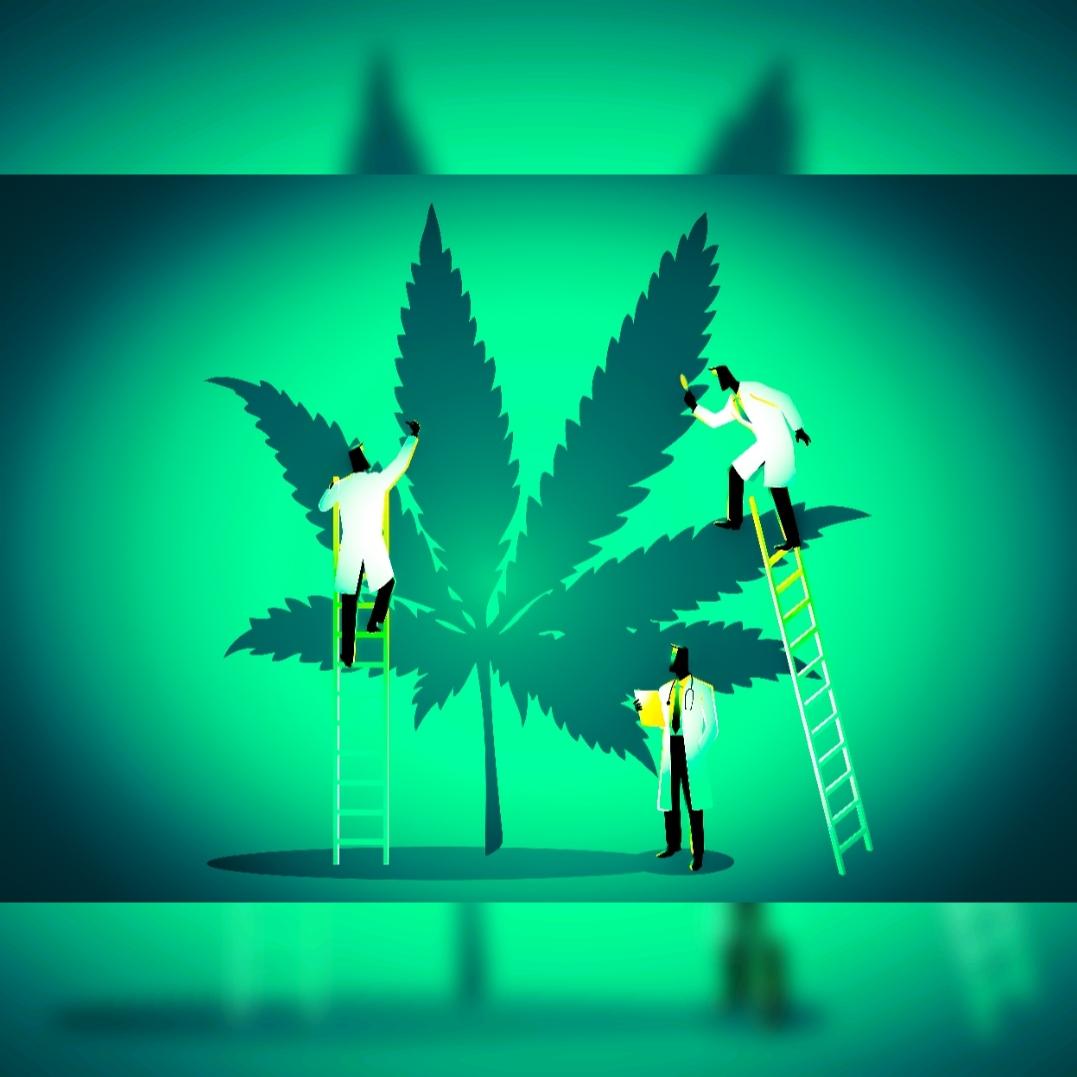 Cannabis-Experten plädieren auf Freigabe