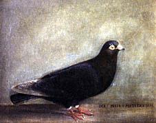 """Ölgemälde 1853, """"Schwarze Taube"""" der 1. Preis von Potiers"""