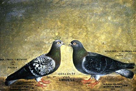 """Ölgemälde 1854 """"Krönchen und Kränzchen"""", die wohl bekanntesten Brieftauben der frühen Geschichte des Brieftaubensportes. Concours von Bayonne, 1. und 2. Preis"""