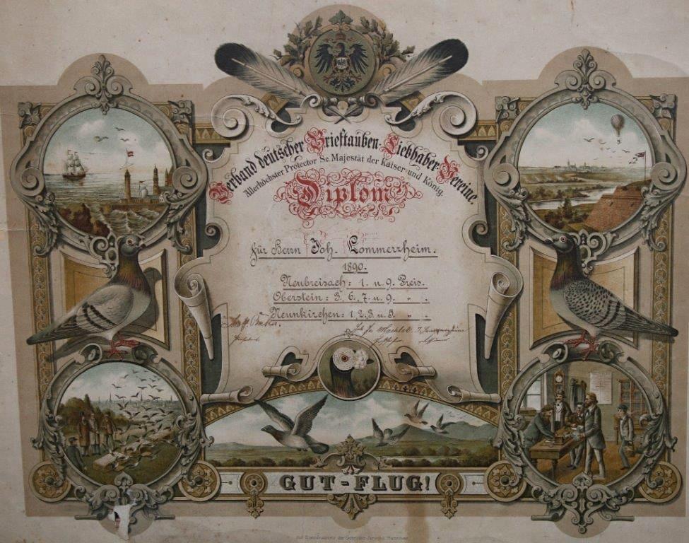 Diplom des Verbandes dt. Brieftauben-Liebhaber-Vereine aus dem Jahr 1890
