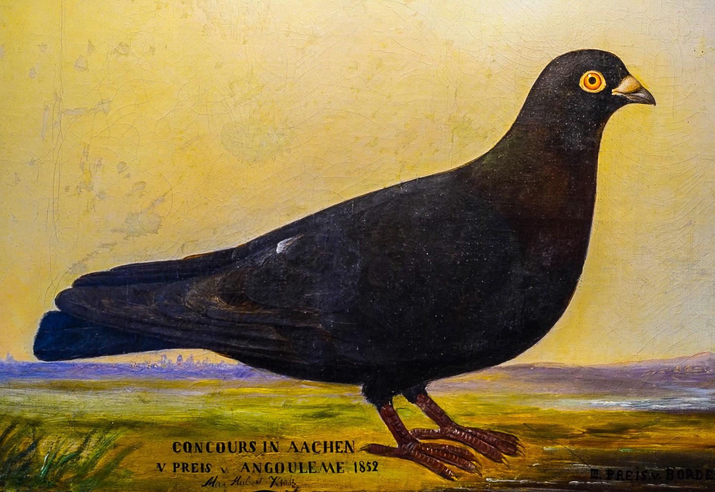 """Vermutlich das älteste Tauben-Diplom überhaupt: Ölgemälde """"Concours in Aachen 1852"""", die Taube erreicht den  5. Preis von Angouleme und 3. Preis von Bordeaux. Unbekannt ist, ob Max Hubert Kautz Züchter der Taube oder Maler des Bildes ist."""