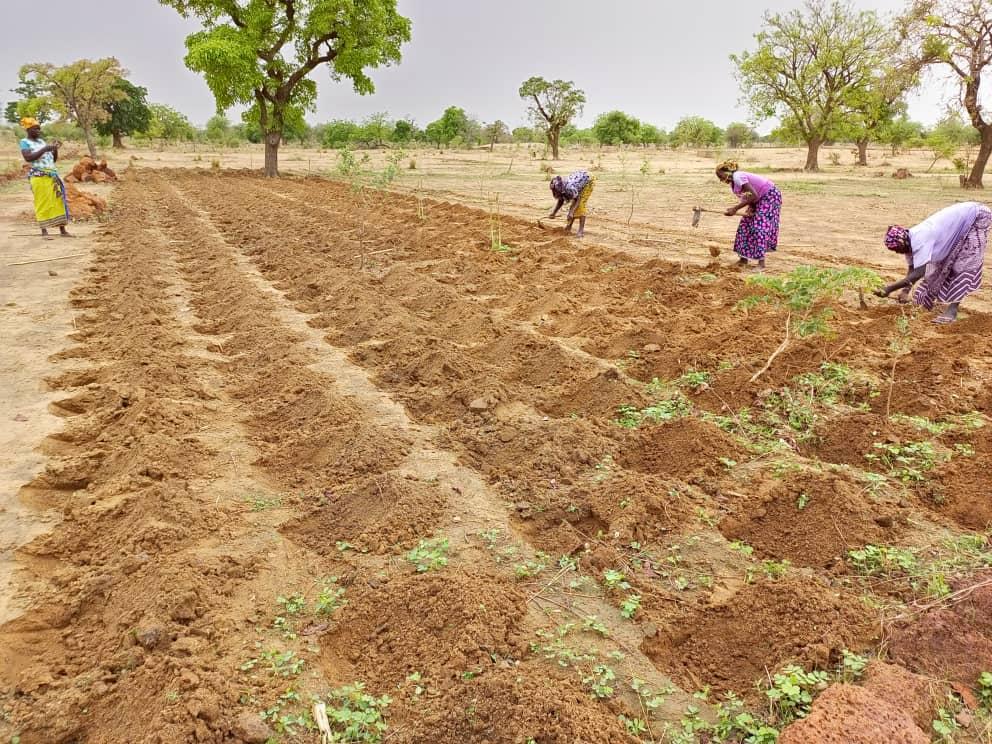 Les membres du CNABio travaillent d'arrache-pied pour vulgariser les pratiques agroécologiques