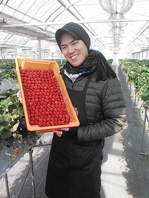 Nonhoi strawberry farm's director Mitsuhiro Mizutani2