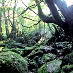 白谷雲水峡 苔の森