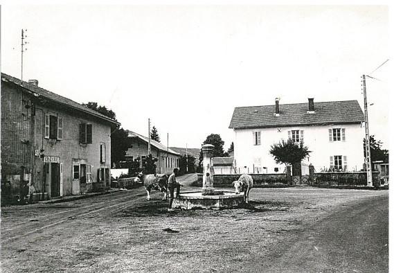 Vieu d'Izenave: Place de la Mairie-Ecole: Troupeau de M. Musy