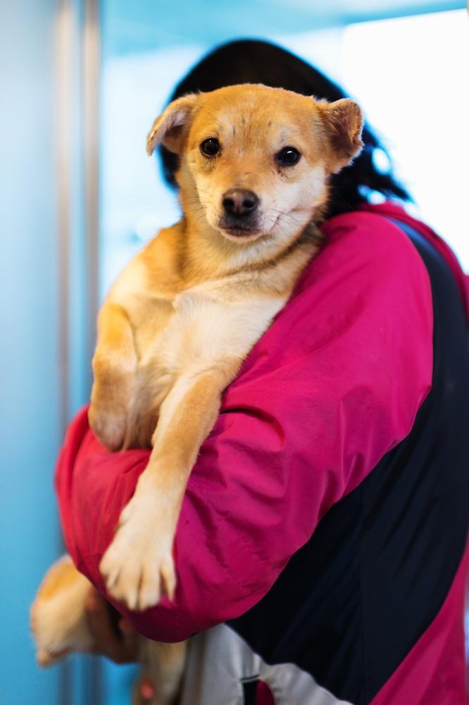多頭飼育崩壊環境から保護した犬。寄生虫や栄養失調によると思われる衰弱が著しく、集中的に看ることができる態勢をとっています。