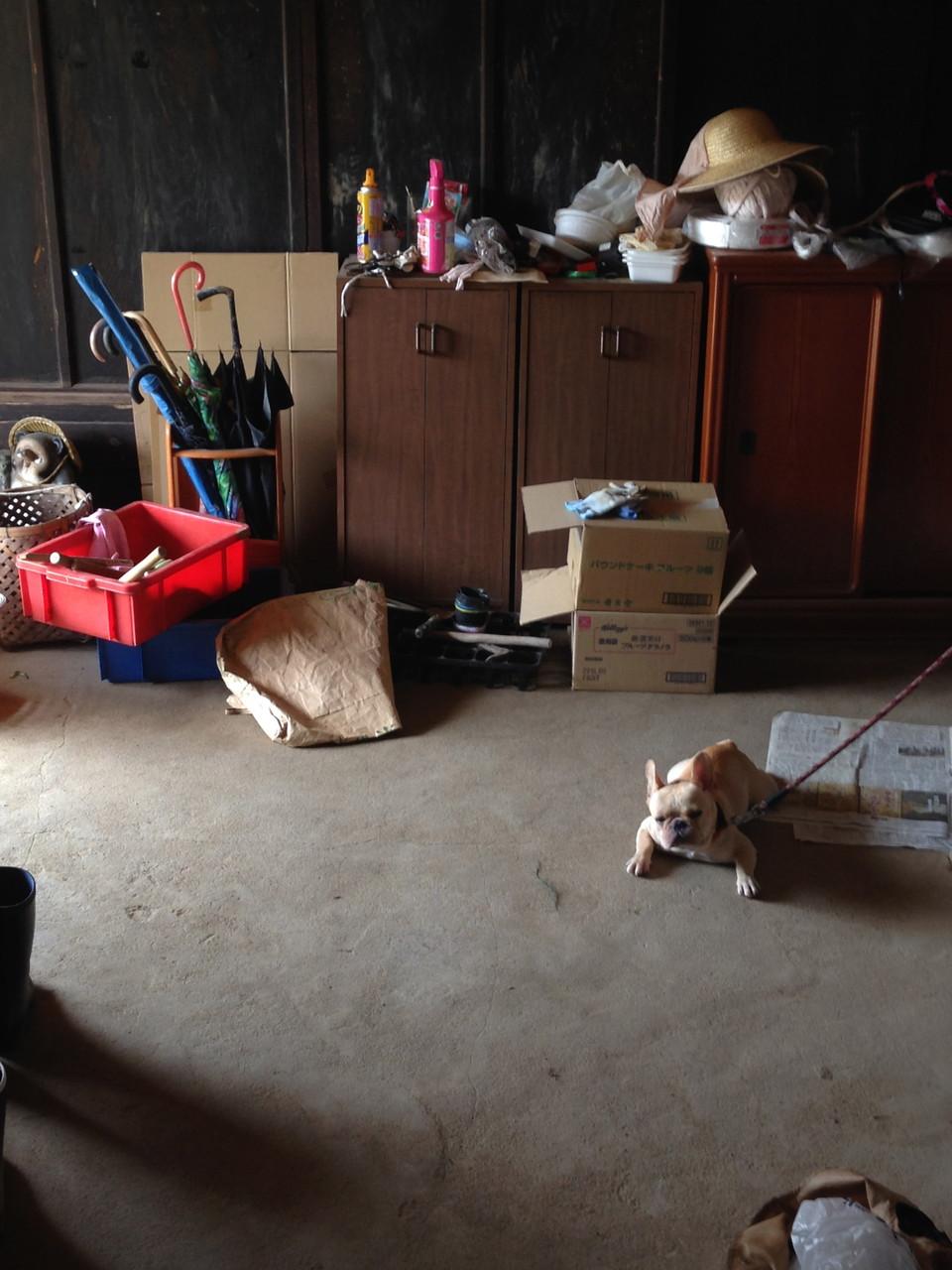 田舎のお家は床が冷たくて気持ちいいね〜
