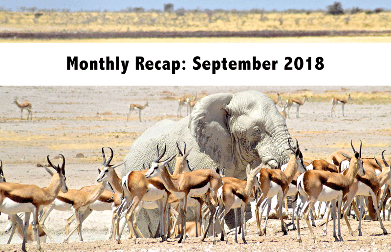 Monthly Recap - September 2018