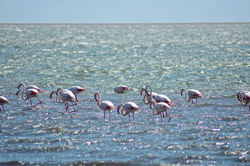 2 Weeks in Namibia - Your Ultimate Itinerary - Flamingos at Walvis Bay