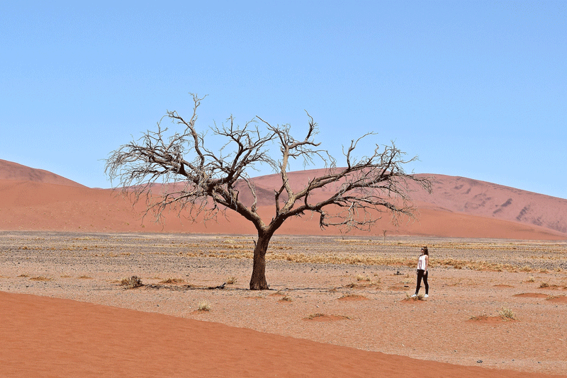 2 Weeks in Namibia - Your Ultimate Itinerary - Namib Naukluft Park