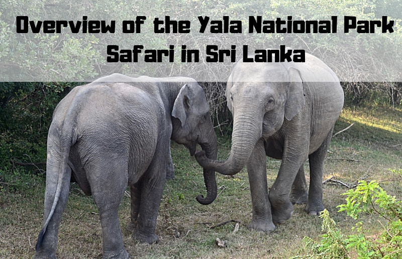 Overview of the Yala National Park Safari in Sri Lanka