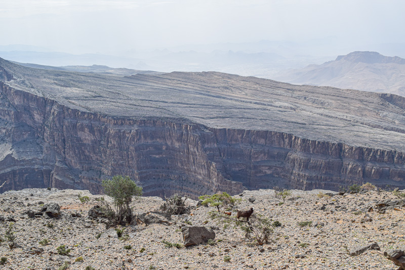 12 Days in Oman - Hiking at Jebel Shams