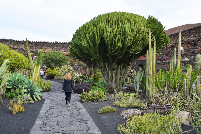 7 Days in Lanzarote - Jardin de Cactus