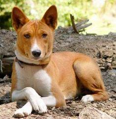 Foto: 101dogbreeds.com