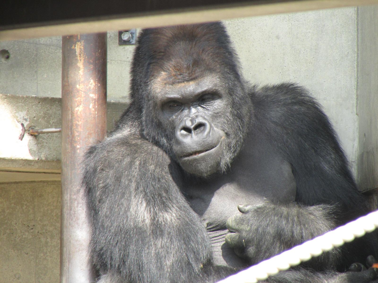 東山動物園・シャバーニ