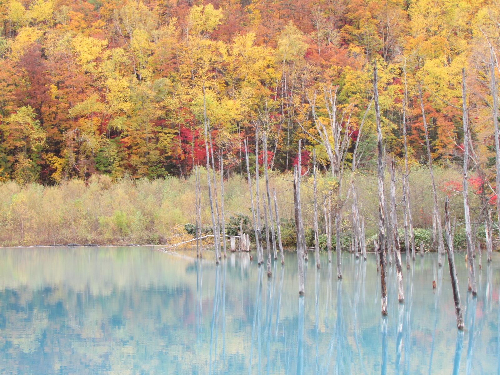 富良野・青の池