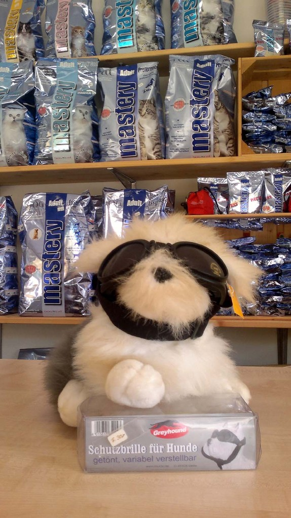 Augenschutz für Hunde