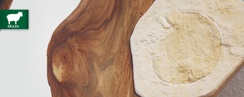 "Unikat-Säulen – Detail Fossil ""Ammonit"" auf einem Holz-Wandobjekt"