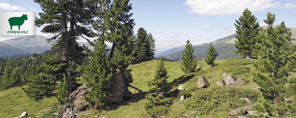 Zirbenholz – Landschaft auf der Turracher Höhe mit Zirben-Bäumen