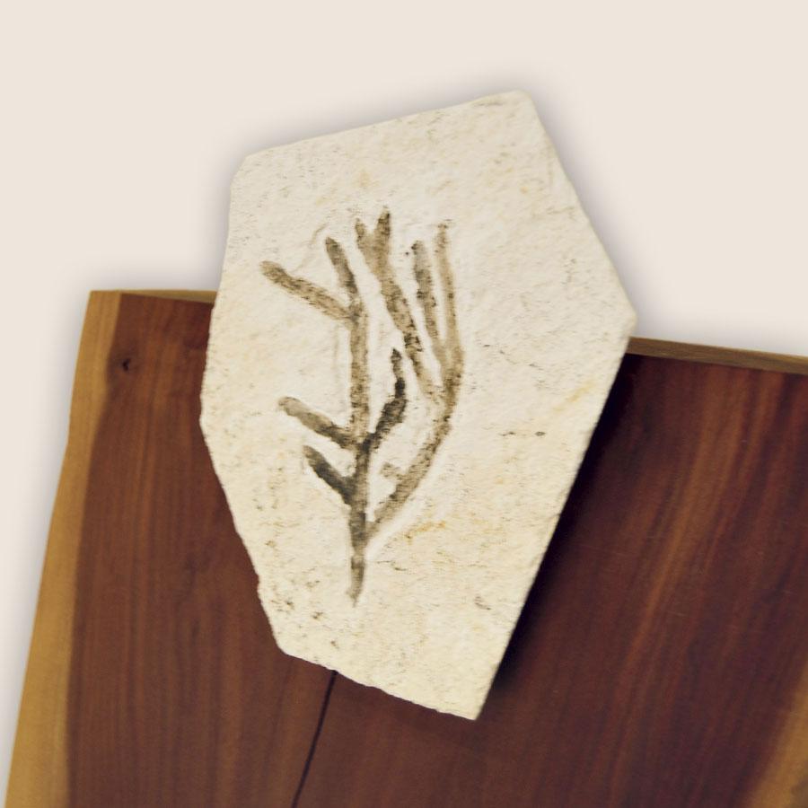 Unikat-Säule mit echtem Fossil