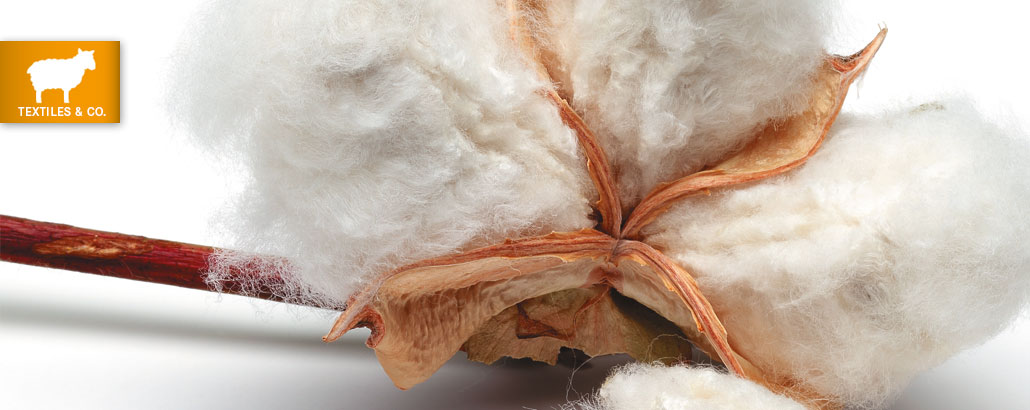 Textiles, Körner und Co. – offene Baumwoll-Kapsel