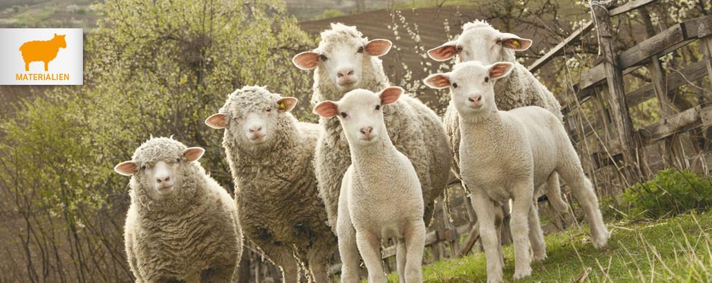 Natürliche Materialien – Gruppe von Schafen und Lämmern