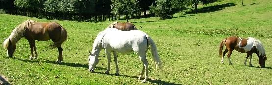 Haaranalyse für Pferde