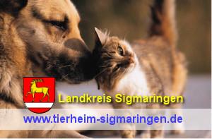 Tierheim Sigmaringen einfach Bild  anklicken