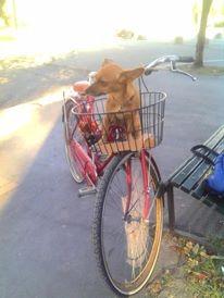 Lila in bicicletta