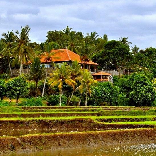 Bali barat rumah dijual. Di jual rumah di Medewi