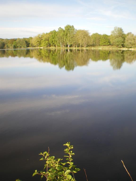 L'étang au petit matin