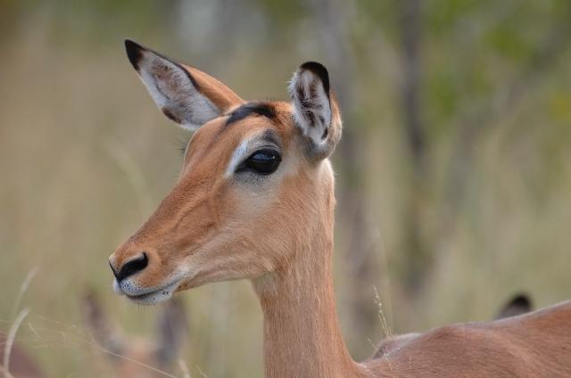 Empala