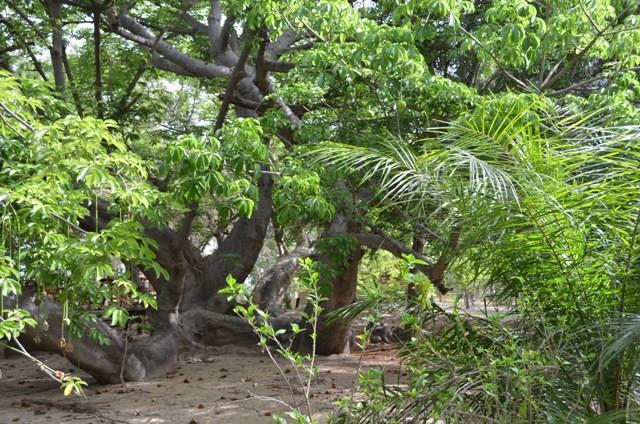 Paradise in Palmarin