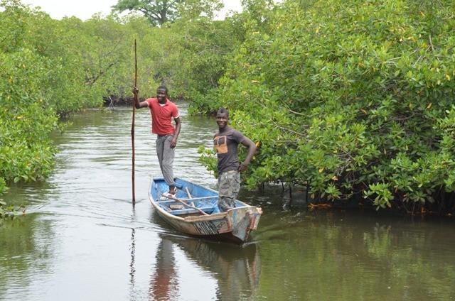 Pirogenfahrt durch Mangroven