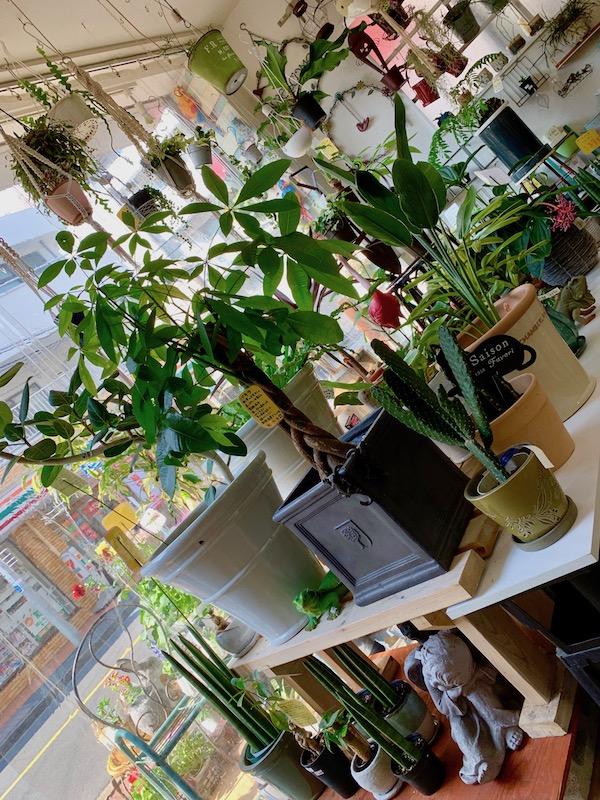 ガーデニングショップ かのはの は、皆様の生活スペースをより楽しく素敵にする植物をご提案しております。植物だけではなく一緒に飾るとより植物が引き立つ鉢や雑貨も豊富に取り揃えております。是非足をお運び下さい。パキラ サボテン ストレチア 観音竹 アンスリューム  ベンガレンシス オウム ネコ トリ フラミンゴ  イグアナ 天使