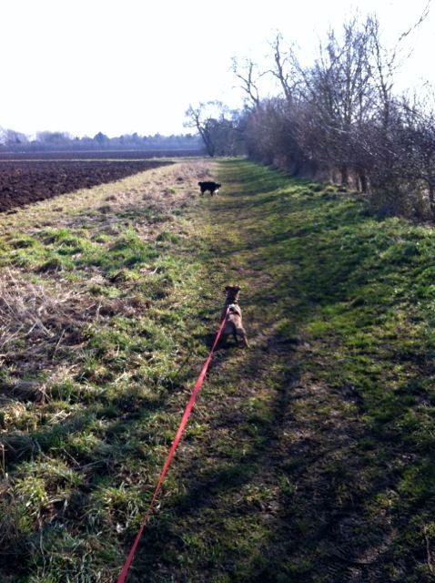 The first signs of sun in Caversfield, Feb 2013 with Bazy (on lead) and Kizzy