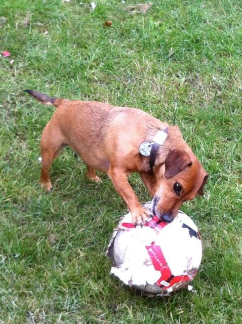Basil, guaranteed to be able to find any abandoned ball!