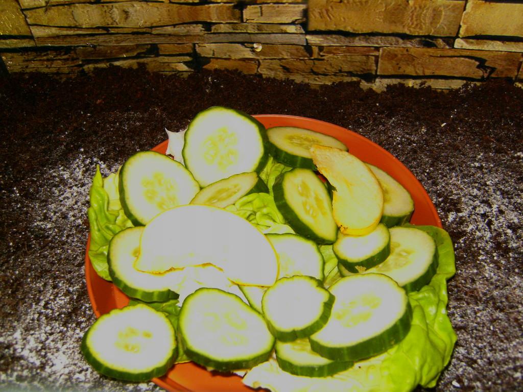 Salat und Gurken das lieben sie am meisten