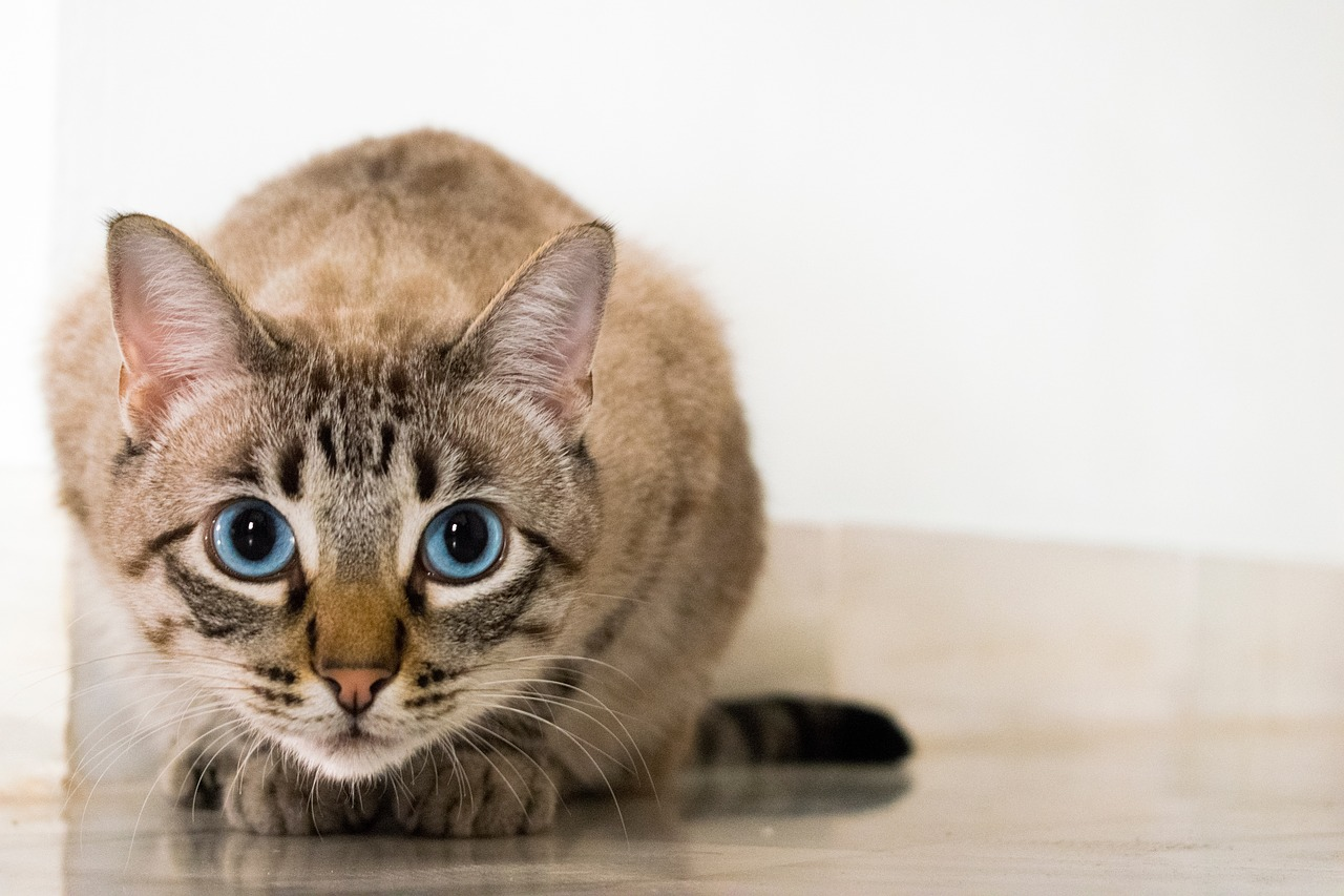 Katzenpsychologin