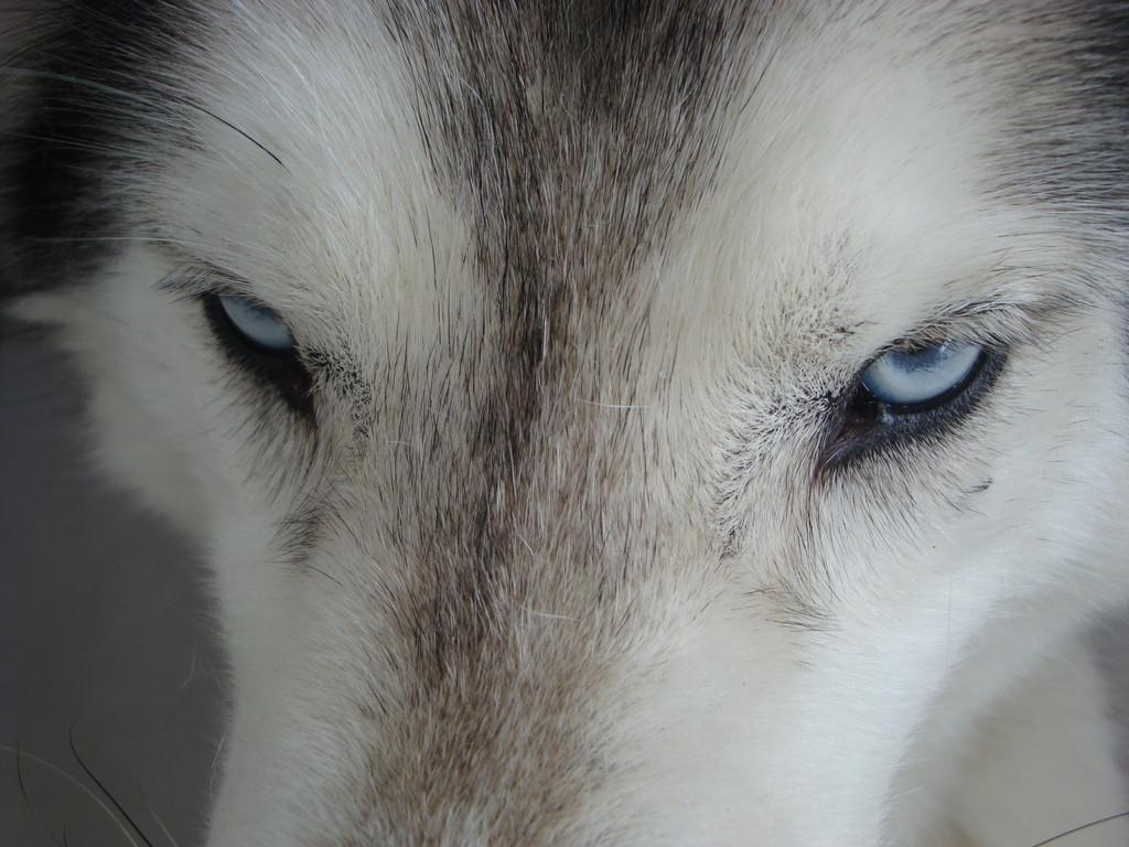Schau mir in die Augen Kleines.... - Snow