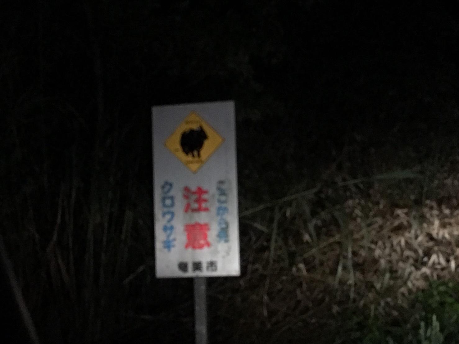 奄美研修 黒ウサギツアー