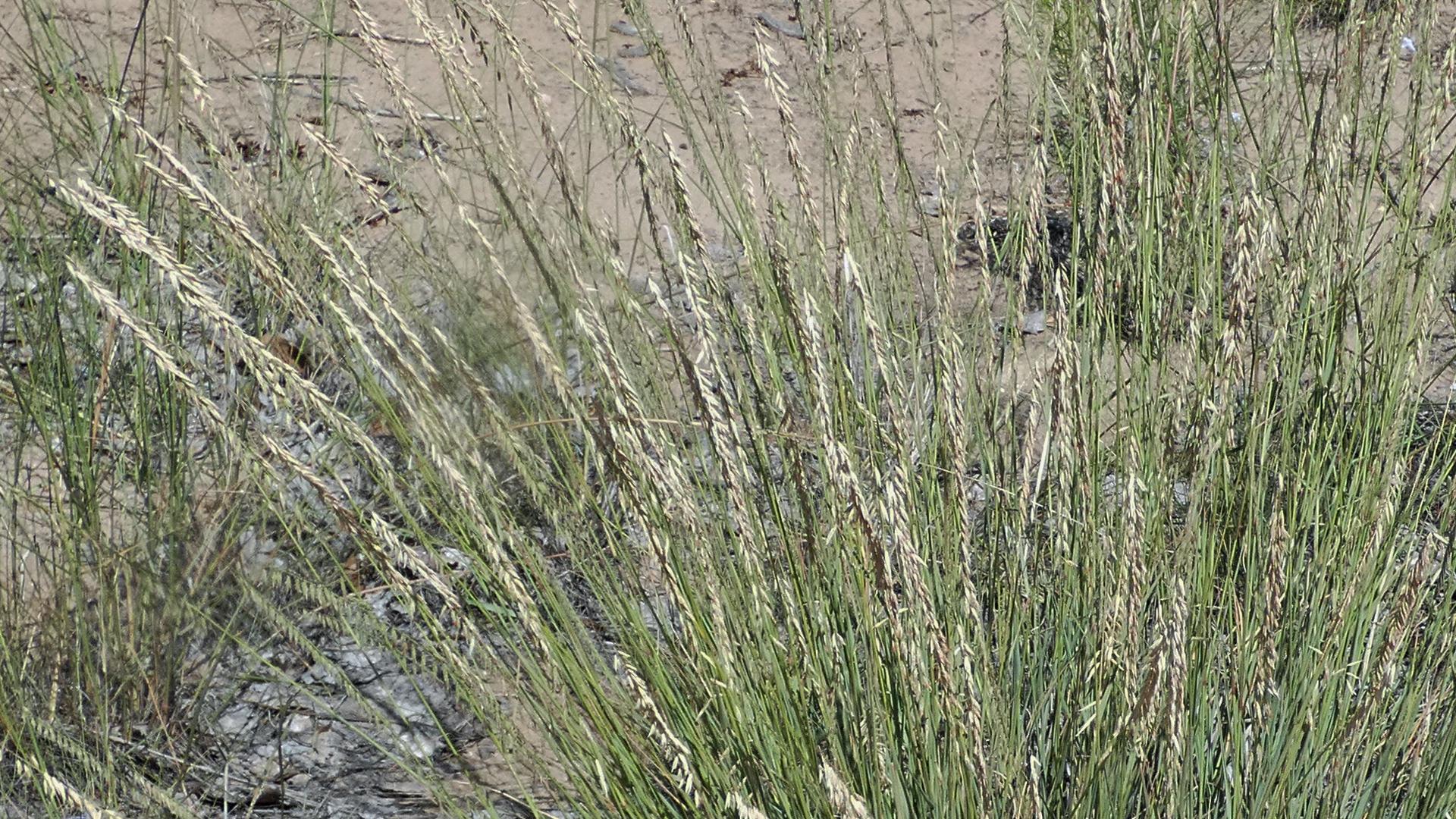 Rio Grande Bosque, Albuquerque, August 2021