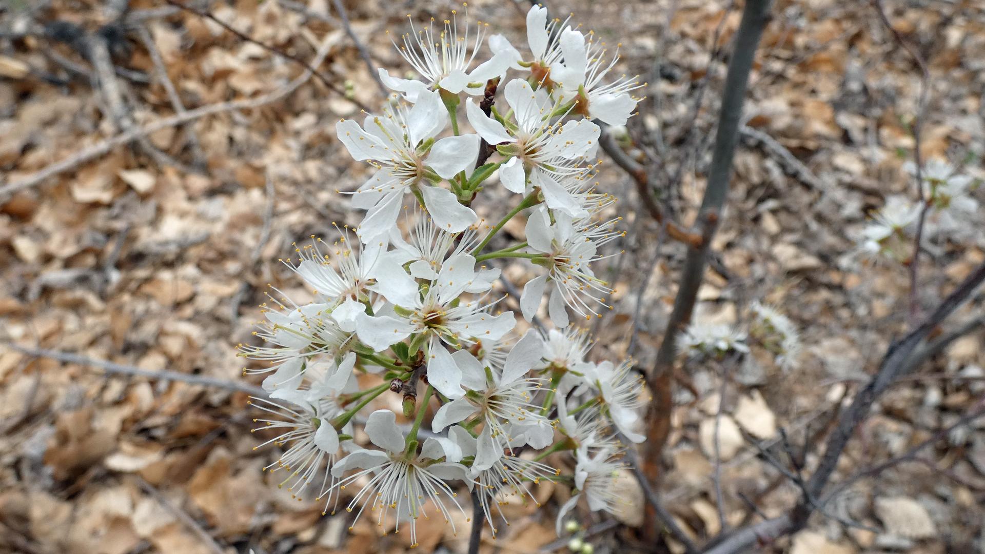 Rio Grande Bosque, Albuquerque, April 2021