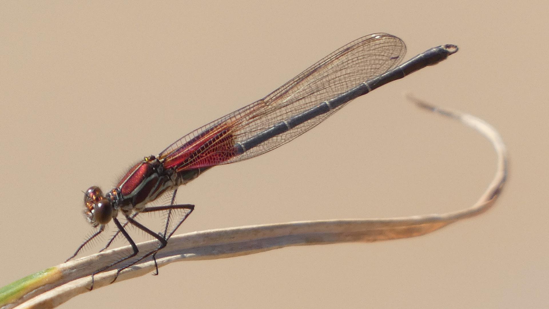 Male, Rio Grande Bosque, Albuquerque, September 2021
