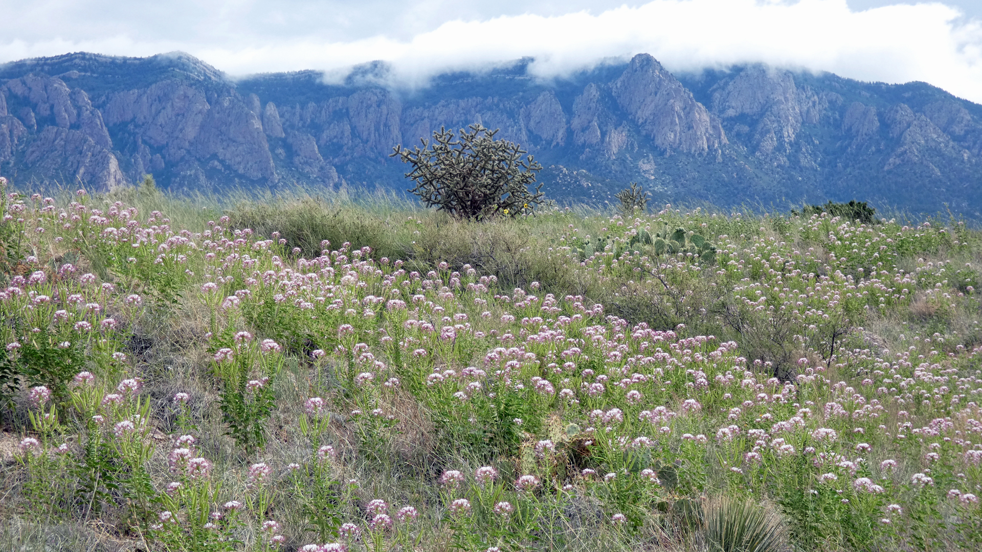 Sandia Mountains west foothills, August 2021