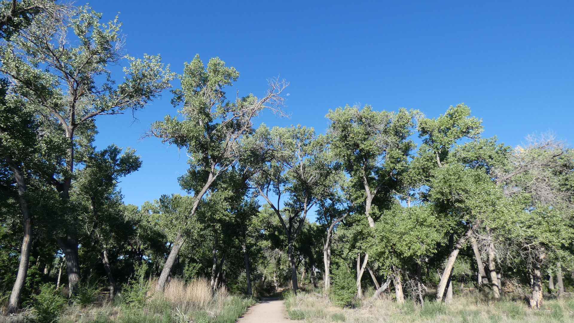 Rio Grande Bosque, Albuquerque, August 2020