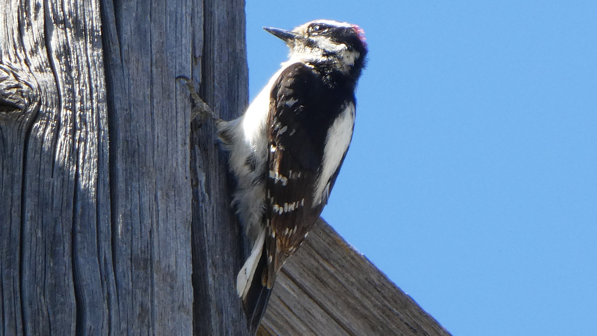 Male, Albuquerque, May 2020